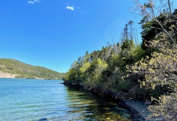 0 MAIN ROAD, DUNFIELD, Newfoundland, Canada A0C 2S0, ,Land,Sale Pending,MAIN ROAD,4038